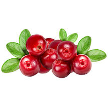 Arctic Cranberry Seed Extract